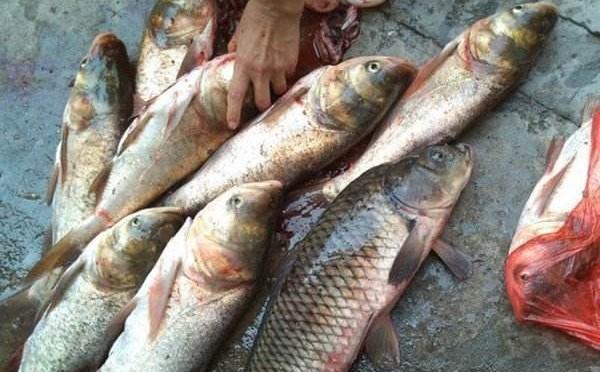 夏季民间常用的海竿饵料配方