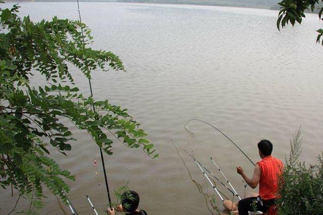 秋季钓草鱼心得分享,喜欢钓草鱼的钓友别错过