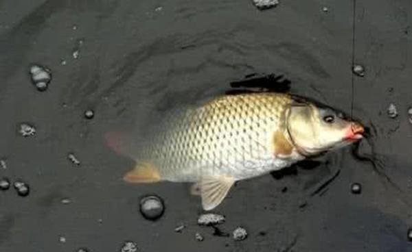 野钓鲤鱼8个自制佳饵配方,适合秋天使用