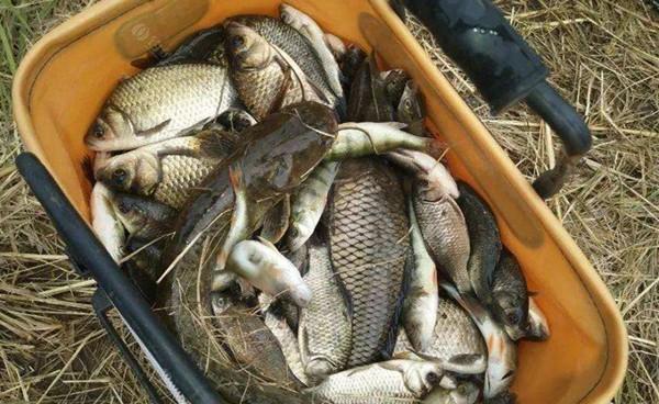 秋季钓鱼4宜,方法得当渔获更有保证