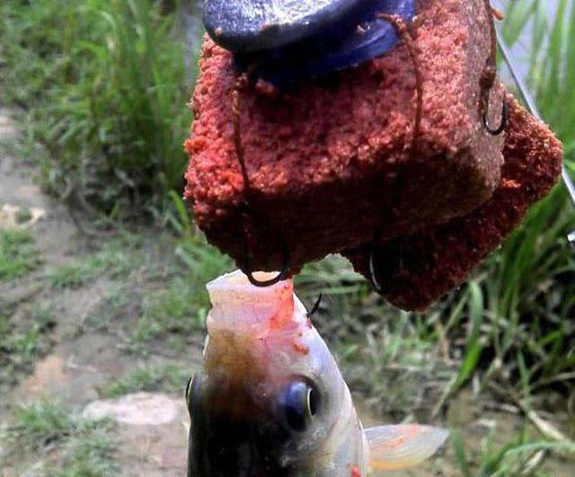 于湖南地区的翻板钩,特别适合钓鲤鱼,它是什么原理