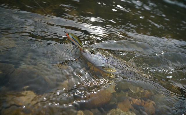 串钩钓鱼属于路亚吗?