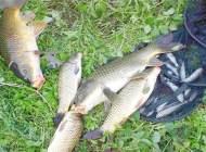 春季和秋季,都是钓鱼的黄金季节